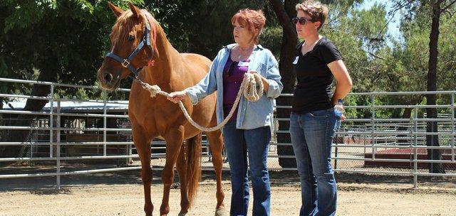 Horses Help Caregivers Beat Stress and Depression