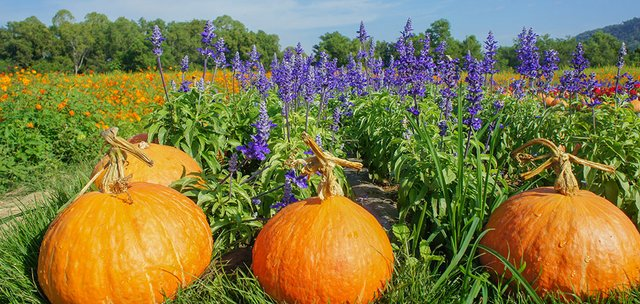 Of Promises and Pumpkins